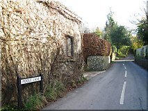 ST6601 : Piddle Lane, Cerne Abbas by Alex McGregor
