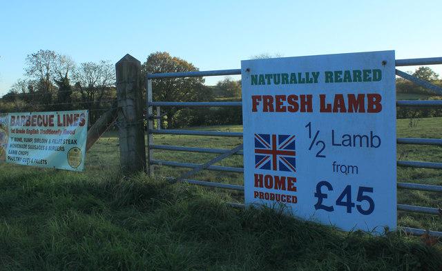 2012 : Lamb at Spring Farm