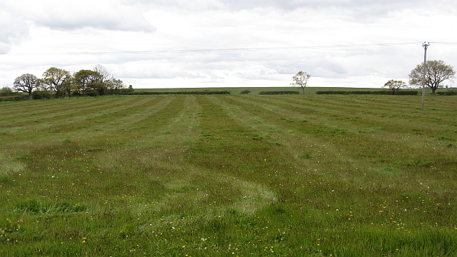 Rolled pasture