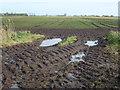 TL2292 : Next years harvest by Richard Humphrey