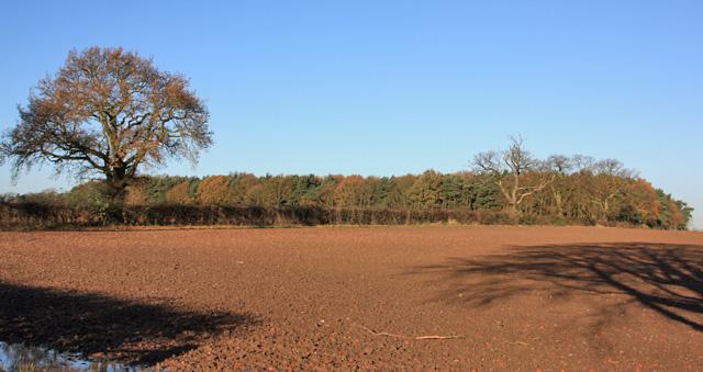 Tom Fisher Plantation