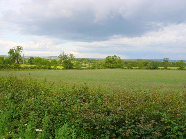 Grass fields near Iron Gate Farm