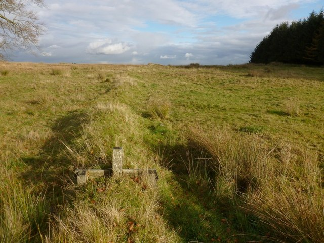 Remains of a field dyke