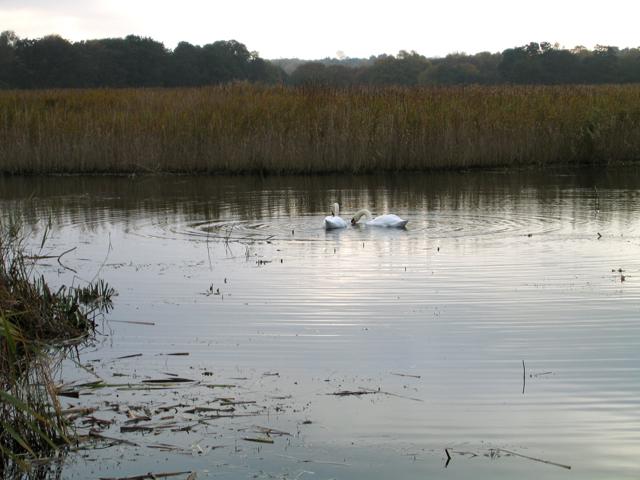 The Fens, North Warren Nature Reserve, Thorpeness, Suffolk