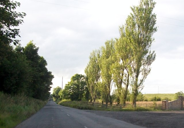 A tree-lined section of the R162 at Newcastle, Co Meath