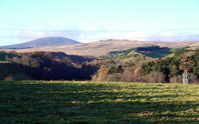 Parkland above valley of Lilburn Burn