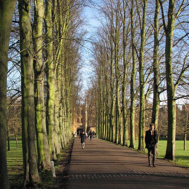 Trinity College: The Avenue