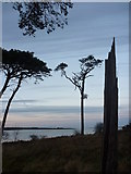 NT6378 : Coastal East Lothian : A Sharp Stump At Hedderwick by Richard West