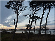 NT6378 : Coastal East Lothian : Feeling The Blast by Richard West