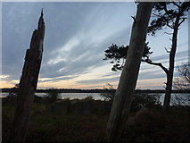 NT6378 : Coastal East Lothian : Blocks and Pines at Hedderwick by Richard West
