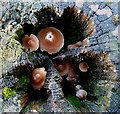 NT4729 : Fungi inside a fence strainer post by Walter Baxter