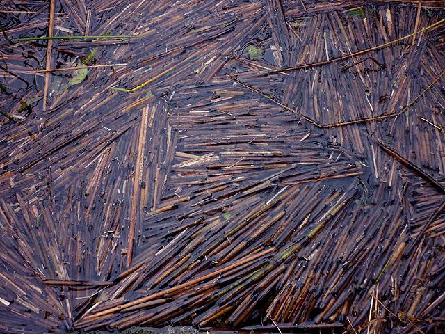 Dead reed stems, Bigland Tarn