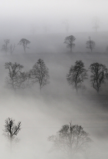 Mist and trees at Brotherstone
