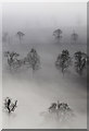 NT6235 : Mist and trees at Brotherstone by Walter Baxter