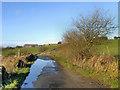 SJ9890 : Ernocroft Lane by David Dixon