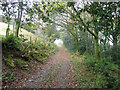 NY1729 : Green Lonning, public bridleway and track by Graham Robson