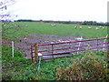SP1146 : Sheep Pasture by Nigel Mykura