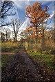 ST8857 : Path in Green Lane Wood by Doug Lee