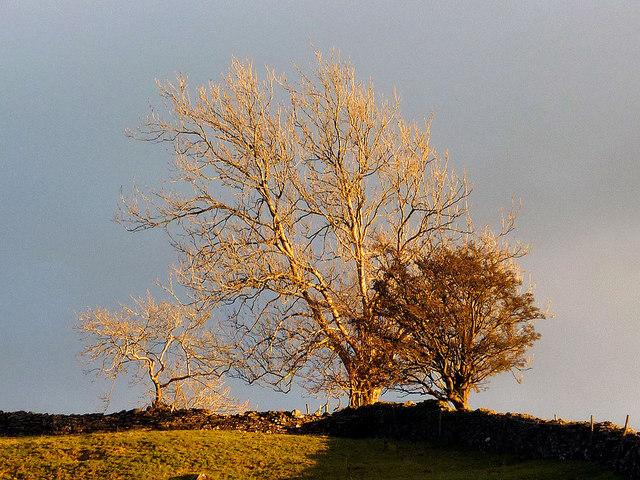 Winter sunshine on trees, Garnett Bridge