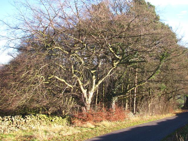 Self-regenerating woodland