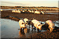 SK8569 : Mud glorious mud by Richard Croft