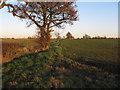 TL9404 : Trees on field boundary by Roger Jones