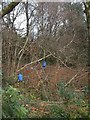 ST1401 : Feeders for pheasants on St Cyres' Hill by David Smith