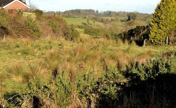 Undeveloped field, Saintfield