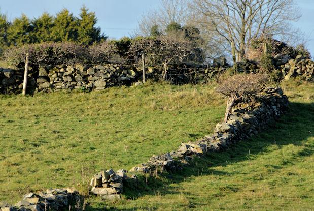 Drystone walls near Saintfield (1)