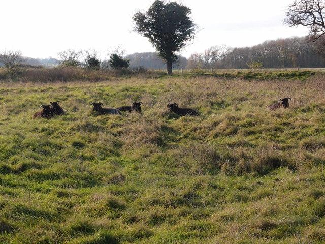 Torpel Manor Field