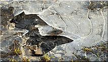 J4482 : Frozen puddle near Helen's Bay by Albert Bridge