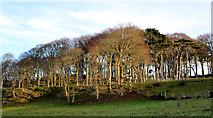 J4482 : Pythic Wood near Helen's Bay (2) by Albert Bridge