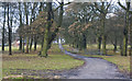 SJ4593 : The road into Knowsley Park from Paddock Lodge by Ian Greig