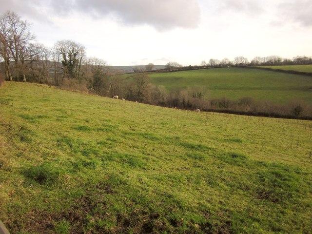 Sheep pasture near Mount House School