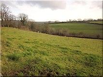 SX4975 : Sheep pasture near Mount House School by Derek Harper
