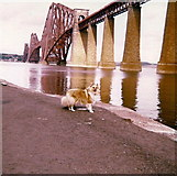 NT1378 : Hawes Pier and the Forth Bridge - 1981 by Elliott Simpson