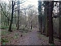 SK3353 : Path in Shining Cliff Woods by Jonathan Clitheroe