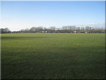 SU6050 : Football pitch - Stratton Park by Given Up