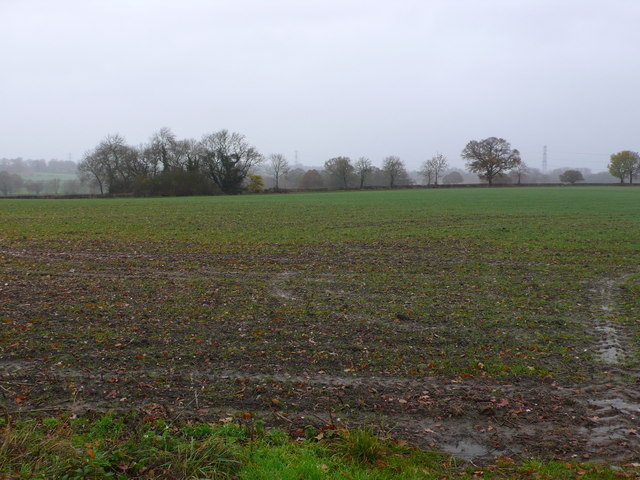 Newly Planted field on the Fen End Rd