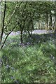 TQ4155 : Bluebells off the North Downs Way, above Titsey by Christopher Hilton