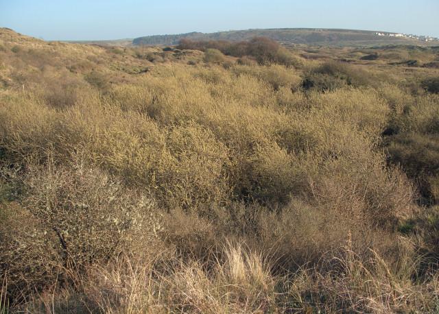 Vegetation at Burrows Well, Merthyr Mawr Warren