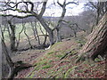 NY7485 : Merry Burn below Low Donkleywood by Les Hull