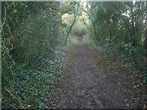 SU5646 : Footpath east of North Waltham by Sandy B