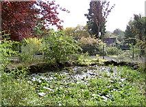 ST3162 : Small pond by Neil Owen