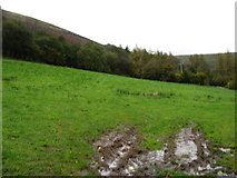 SO2730 : In the Vale of Ewyas, north-west of Llanthony by David Purchase