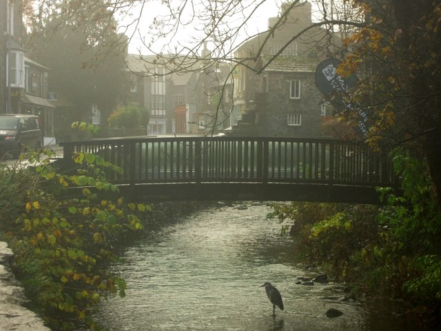 Heron fishing in central Ambleside