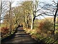 NS9999 : Minor road near The Leys Farm, Muckhart by David Purchase