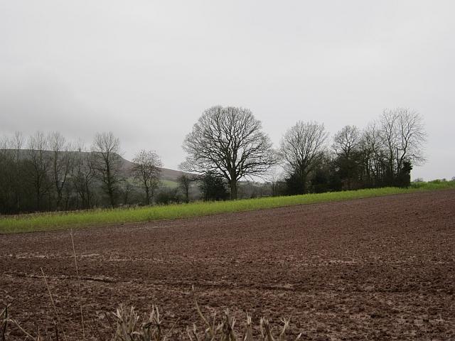 Field, Silvington
