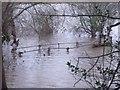 SK3927 : Drowned footbridge by Ian Calderwood