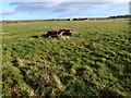 SP7918 : Pasture land near Cow Ground Buildings by Michael Trolove